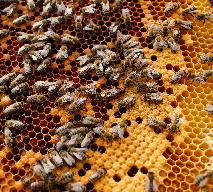 Pamiętajcie o pszczołach!  Światowy Dzień Ziemi z Pasiekami Rodziny Sadowskich