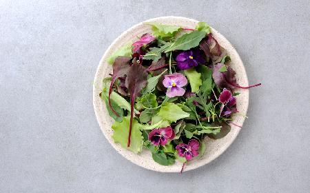 Które kwiaty są jadalne - jakie kwiaty możemy położyć na talerzu?